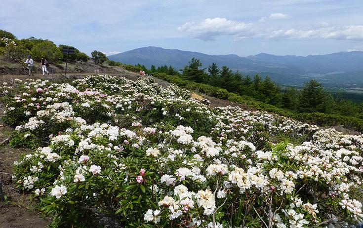 浅間山の眺望もきれいです。